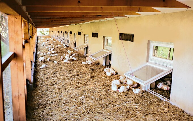 Chicken-Friendly Farming